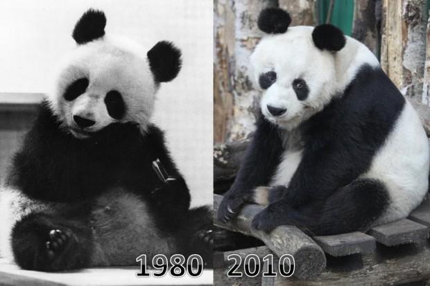 2010-11-05-30-Jahre-Pandas-in-Berlin1-620x413