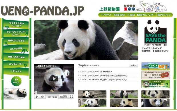 Panda dating site