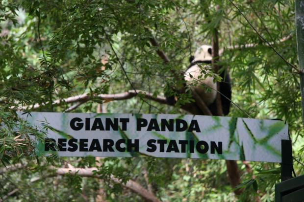 San Diego Panda Canyon changes