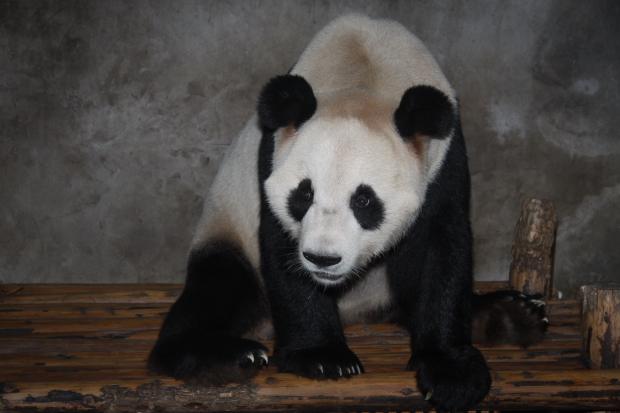 2010-09-26-Project-Panda-day-5-016-Yu-Hin