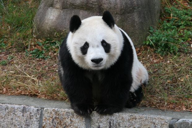 2007-12-13-Kobe-Oji-Zoo-Tan-Tan-033