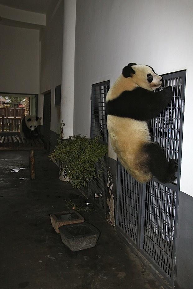2011-11-07-Changsha-Ecological-Zoo-Qi-Fu-Ni-Ni-013