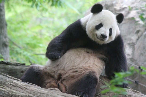 Adult dating tian tian