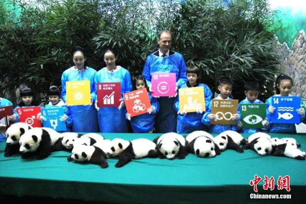 chengdu-12-panda-twins346-620x413