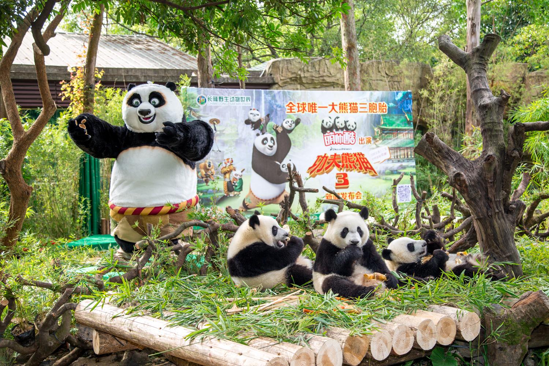 Po visits panda triplets @ Chimelong Safari Park