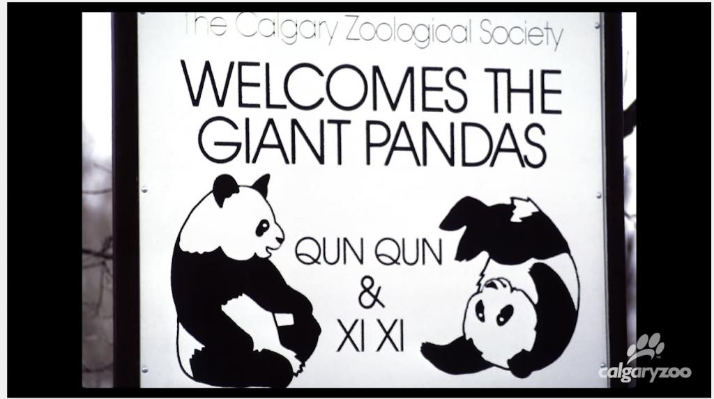 PANDAMAGIC QUN QUN XI XI CALGARY ZOO