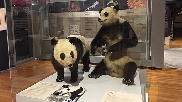 Shao Shao & Chu Lin at Madrid's Natural History Museum