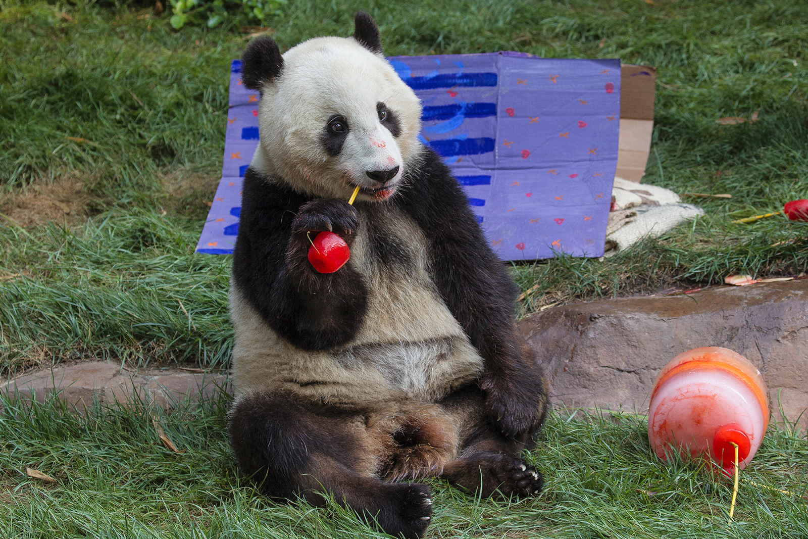 Xiao Liwu's fourth birthday