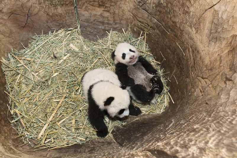 pandas_tgs_zupanc_01_animal_detail_801