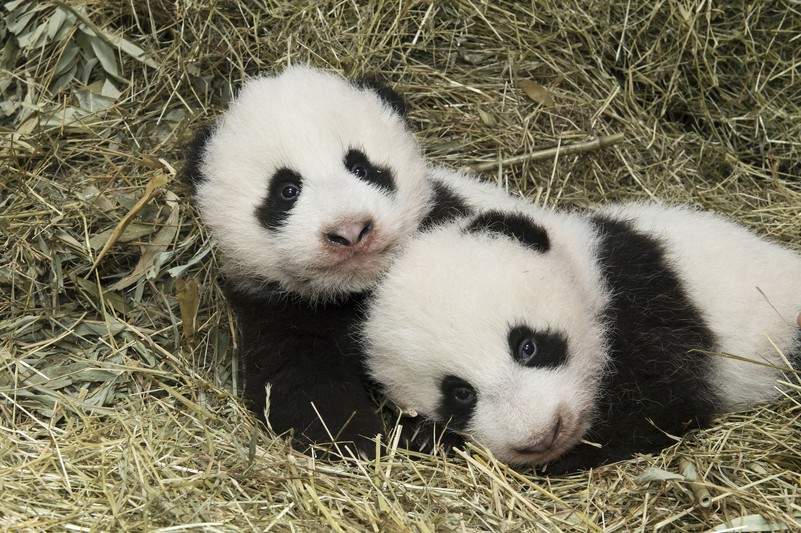 pandas_tgs_zupanc_26_animal_detail_801