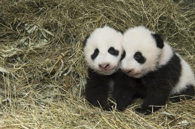pandas_tgs_zupanc_31_animal_detail_801