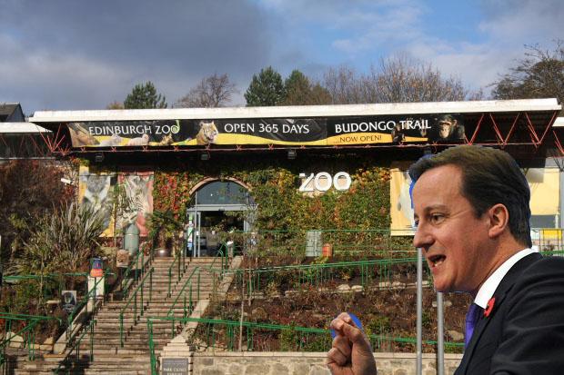 David-Cameron-Edinburgh-Zoo