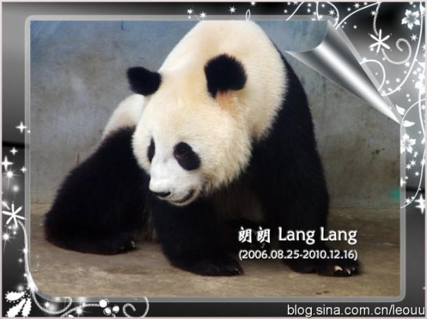 Lang-Lang-620x463