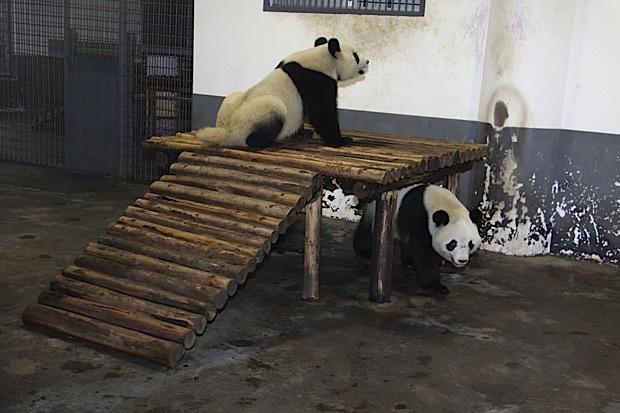 2011-11-07-Changsha-Ecological-Zoo-Qi-Fu-Ni-Ni-020