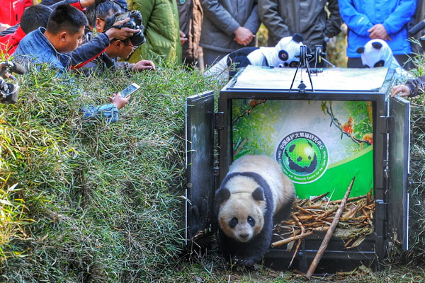 Hua Jiao released in the wild