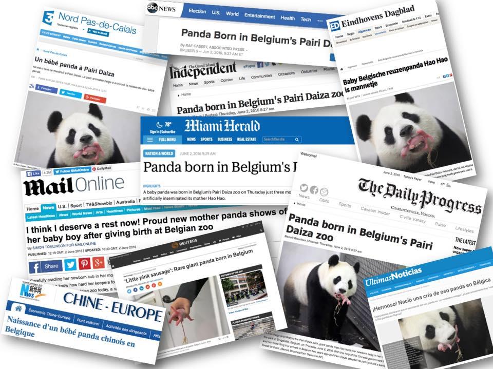 Hao Hao & cub in the media